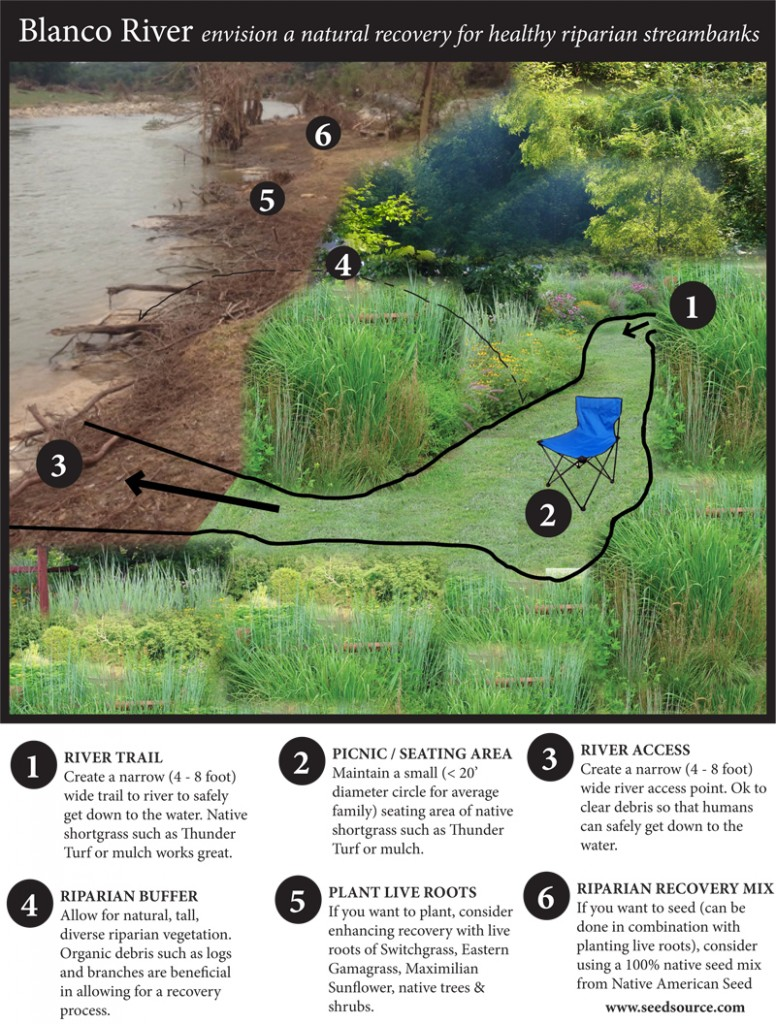 riparian recovery after