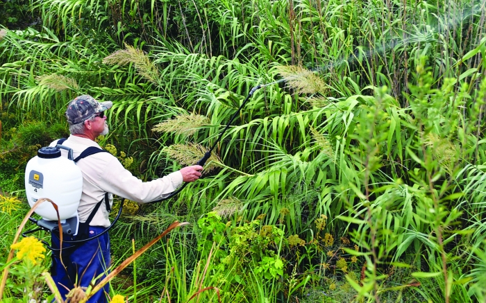 Team begins work on giant river cane