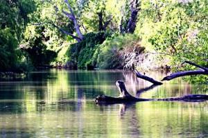 Rivard Report - River
