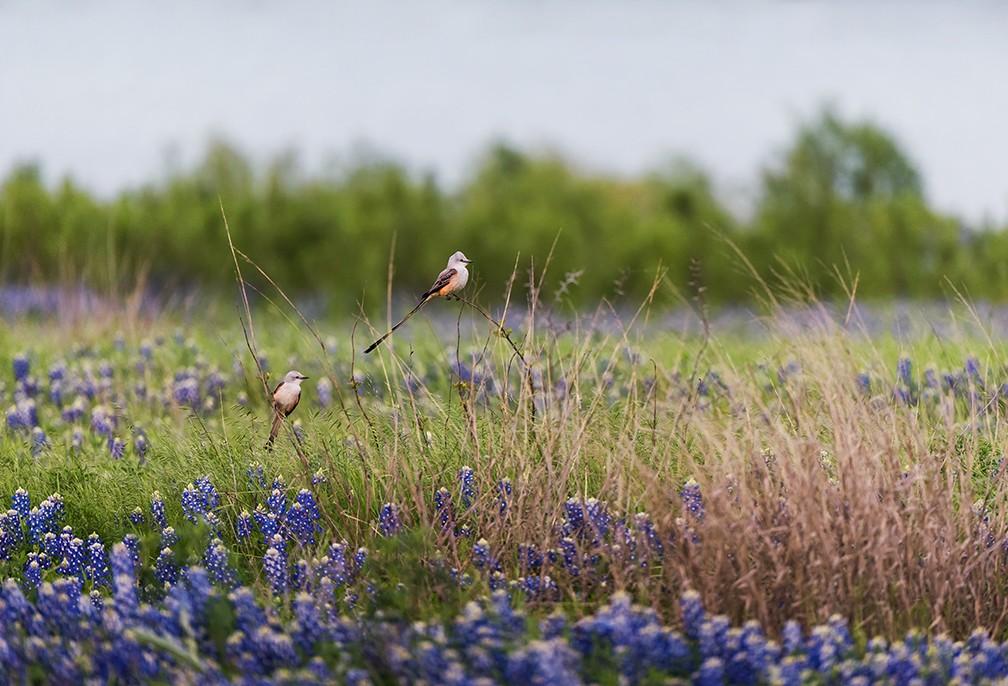 What the Prairie Teaches Us