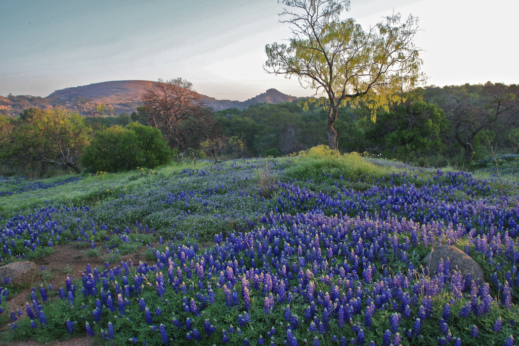 Texas Farm and Ranch Lands Conservation Council Approves $1.4 Million in Grant Awards
