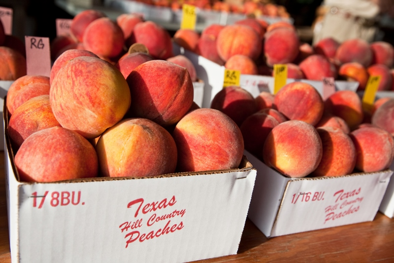 Fredericksburg peaches are ready — earlier than ever
