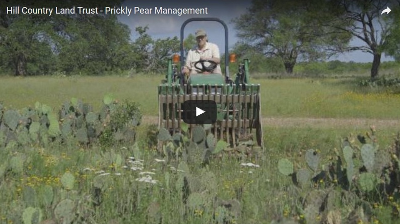The Hill Country Land Trust releases first video in Land Steward Video Series: Prickly Pear Management