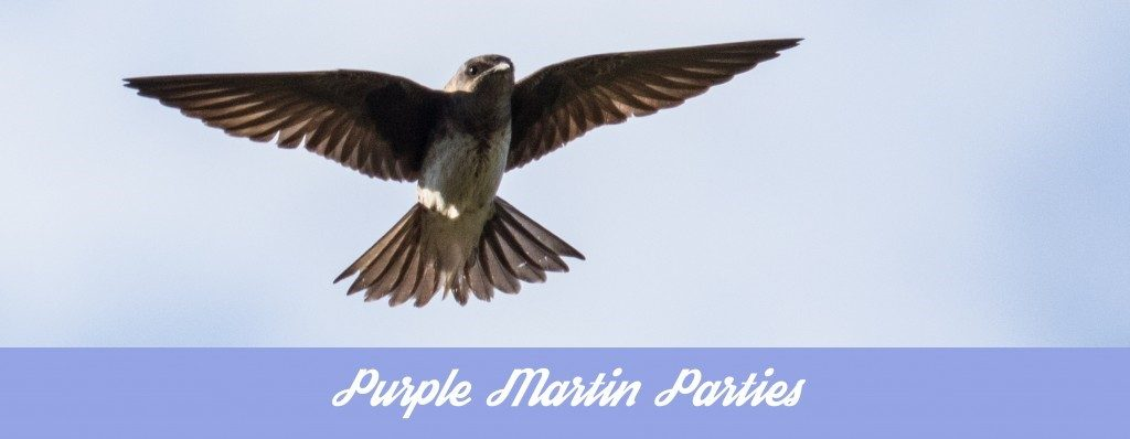 Purple martin parties