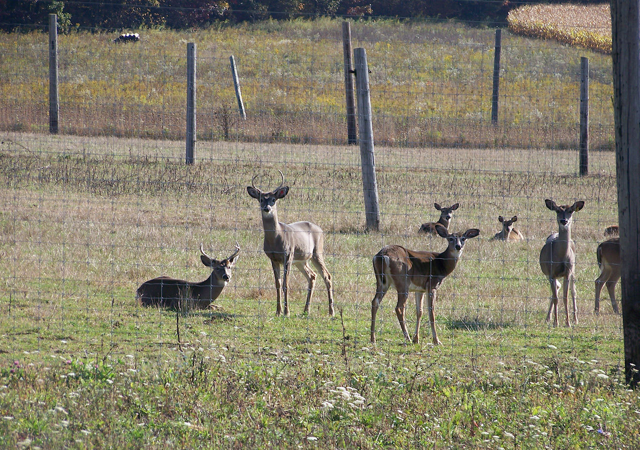 Additional CWD Cases Discovered at a Quarantined Captive White-tailed Deer Breeding Facility