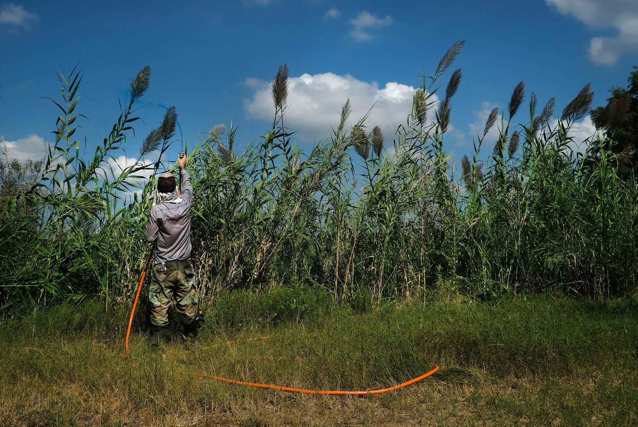 In the Growing Battle Against Invasive Plants, Texas Lags Behind Other States
