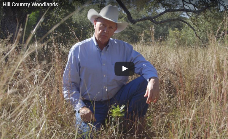 Hill Country Land Trust Video: Hill Country Woodlands