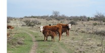 Conservation Of Private Land And Wildlife A Benefit For All
