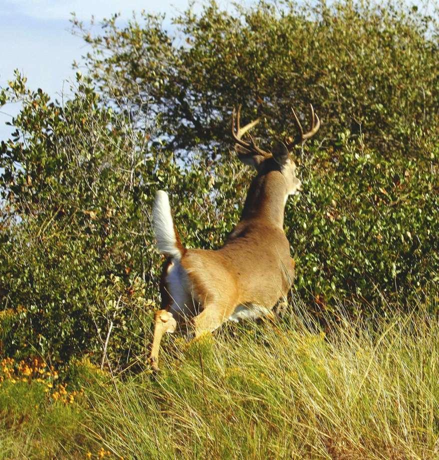 Captive deer must retain tags