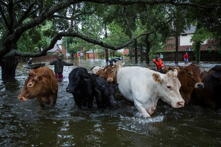 A Texas Farmer on Harvey, Bad Planning and Runaway Growth