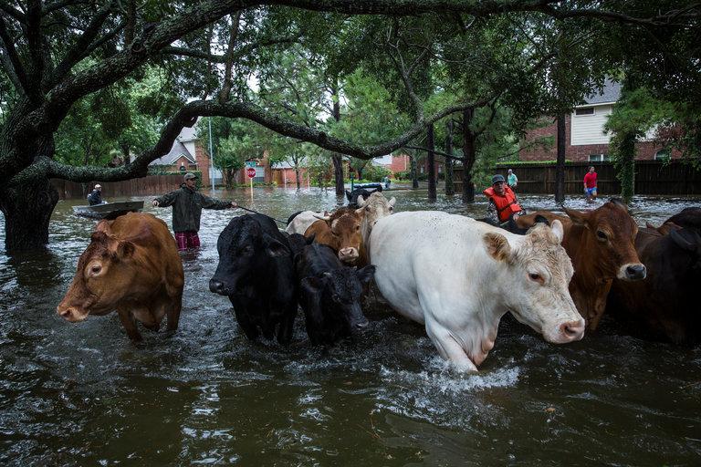 A Texas Farmer on Harvey, Bad Planning and Runaway Growth