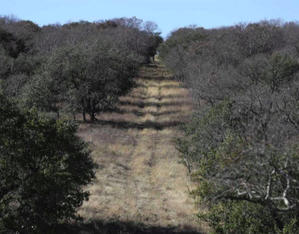 Kinder Morgan sues Austin suburb over anti-pipeline ordinance