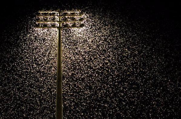 Light pollution is key 'bringer of insect apocalypse'