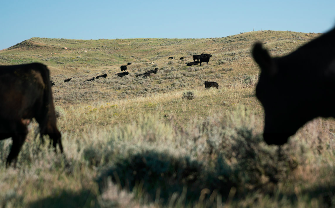 Big money is building a new kind of National Park in the Great Plains