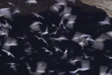 Nature up close: The largest bat colony in the world