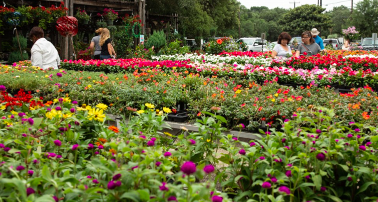 For stay-at-home stress relief, San Antonians turn to gardening