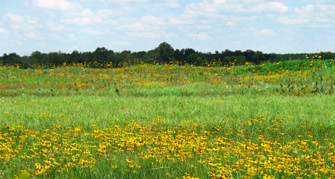 Rare native prairie near Texarkana preserved by family, conservation groups