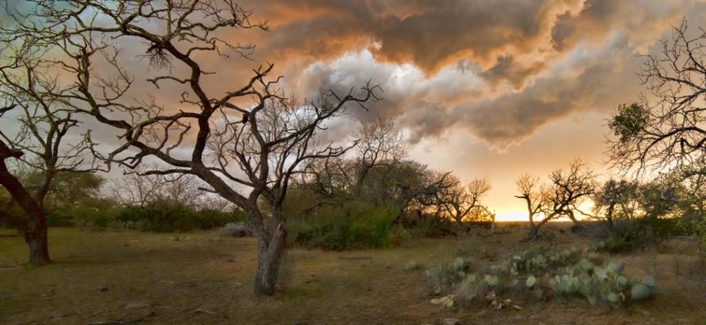A dry landscape at sunset