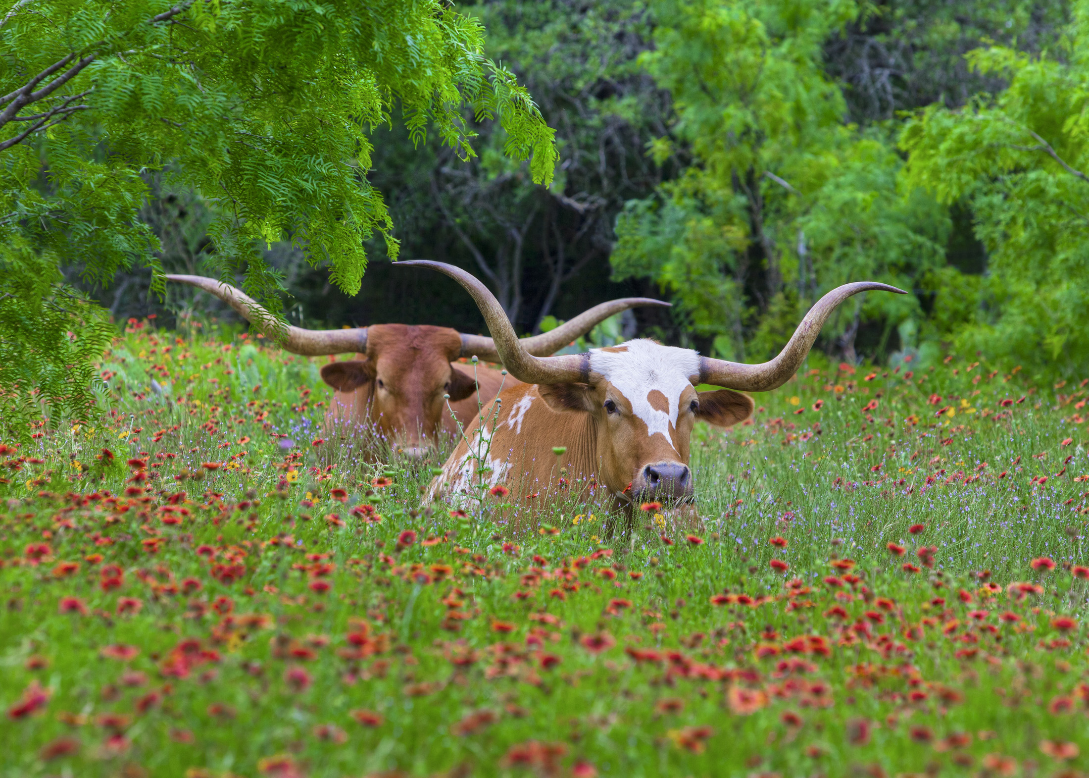 Supporting local Hill Country producers