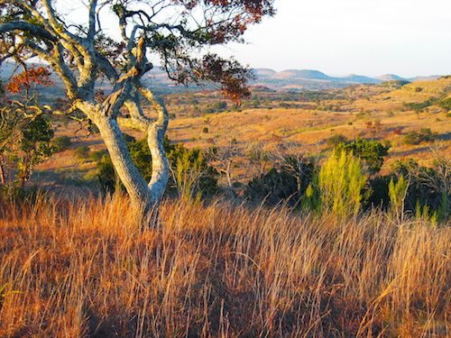 Texas Land Use: A Comprehensive Land Resource Management Study