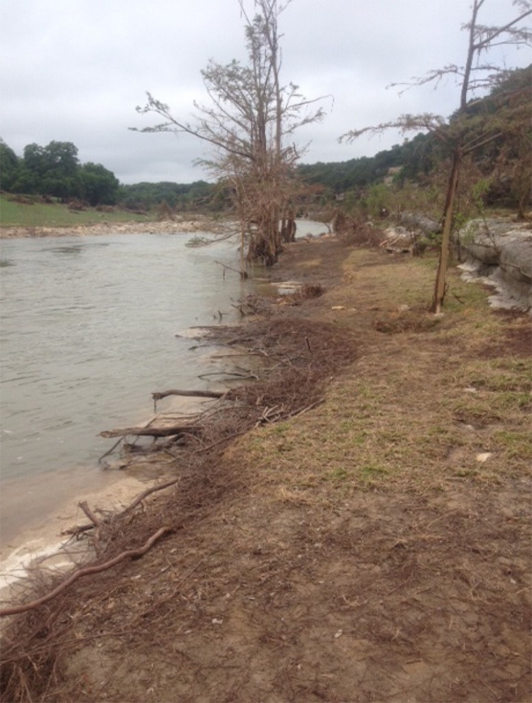 Riparian Recovery before
