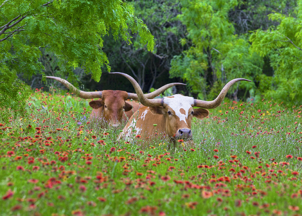 New Texas Farm and Ranch Lands Conservation Council Holds Inaugural Meeting