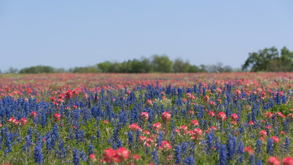Spring Break is here and it's time to capture those bluebonnets! Be sure to submit your favorite shots to the HCA Photo Contest