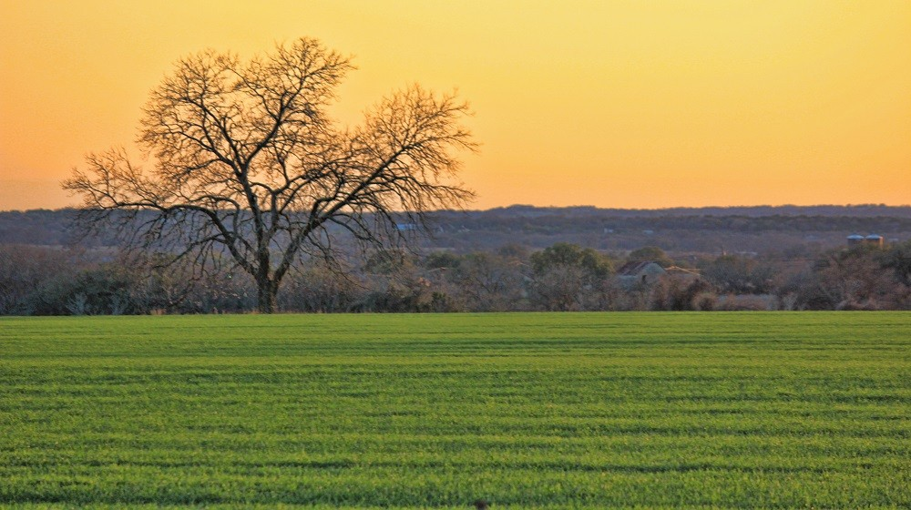 What's at stake when we pave over, fragment and otherwise fail to protect Texas farmland from the disruptions of development?