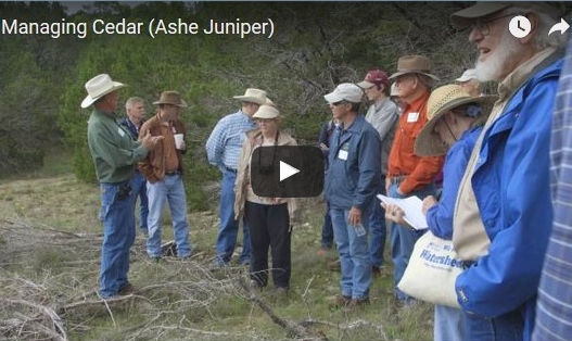 The Hill Country Land Trust video: Managing Cedar