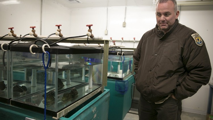 Were hundreds of endangered salamanders stolen from a San Marcos lab?
