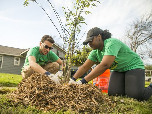 In Dallas as in Phoenix, people look to trees for relief from urban heat islands