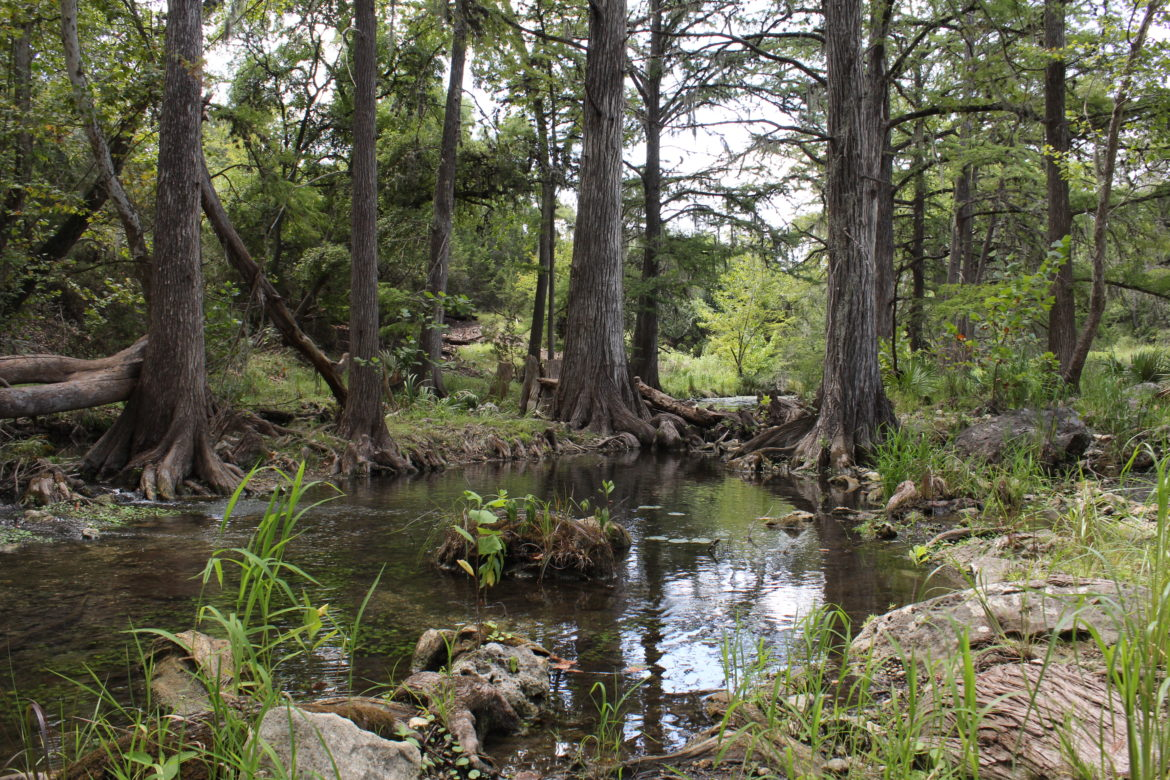 Honey Creek, a pristine Hill Country stream, could soon see treated sewage