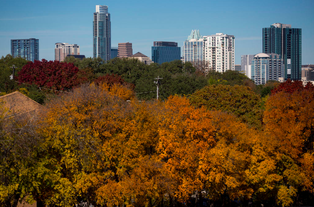 Why are Austin's trees having such a colorful autumn?