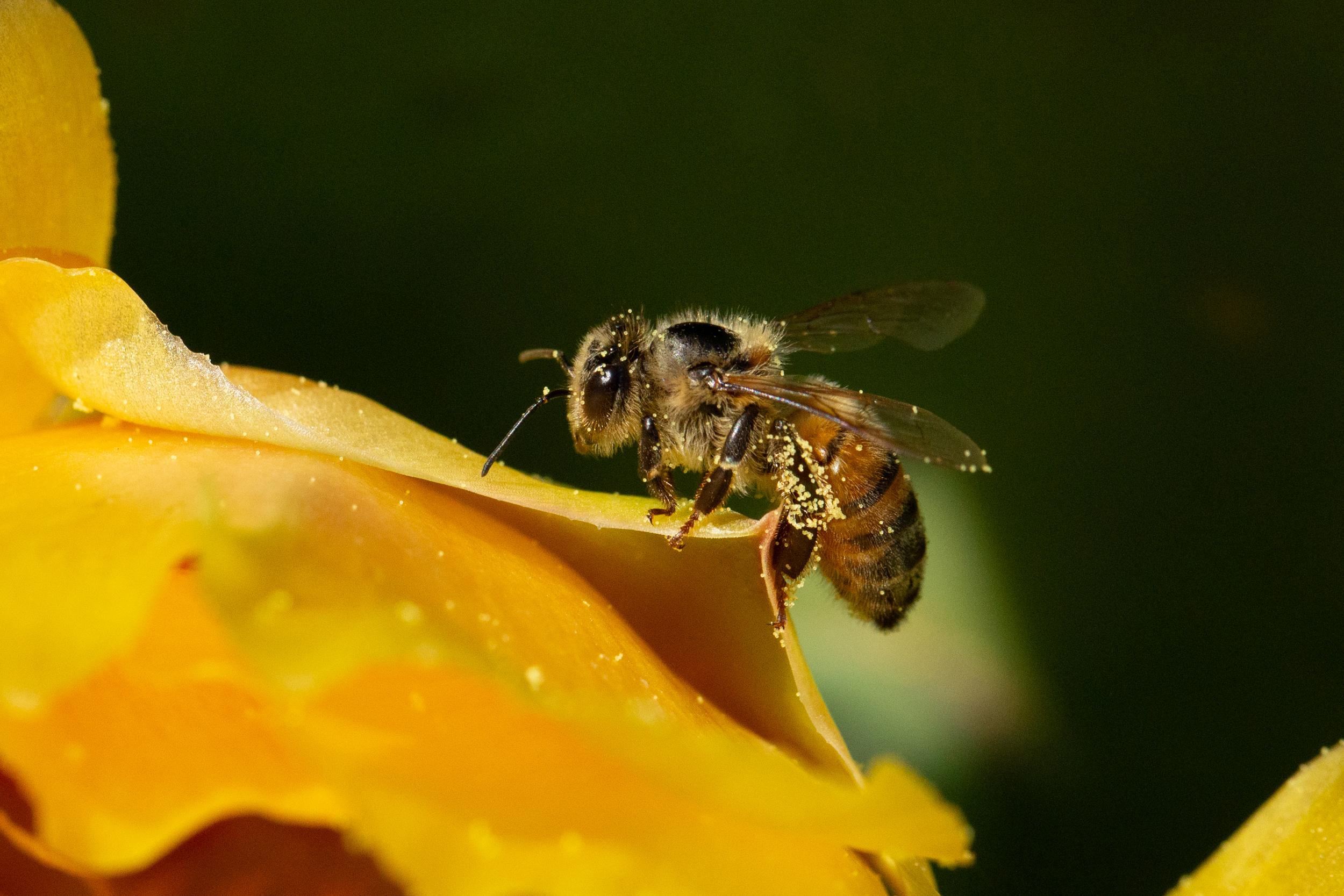 20409 – Carol Whitney – Bees Knees