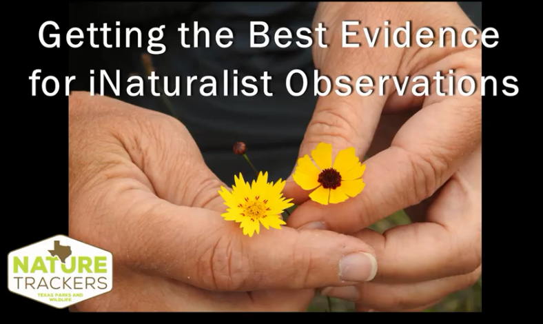 Click to watch the Texas Nature Trackers video on iNaturalist Observations