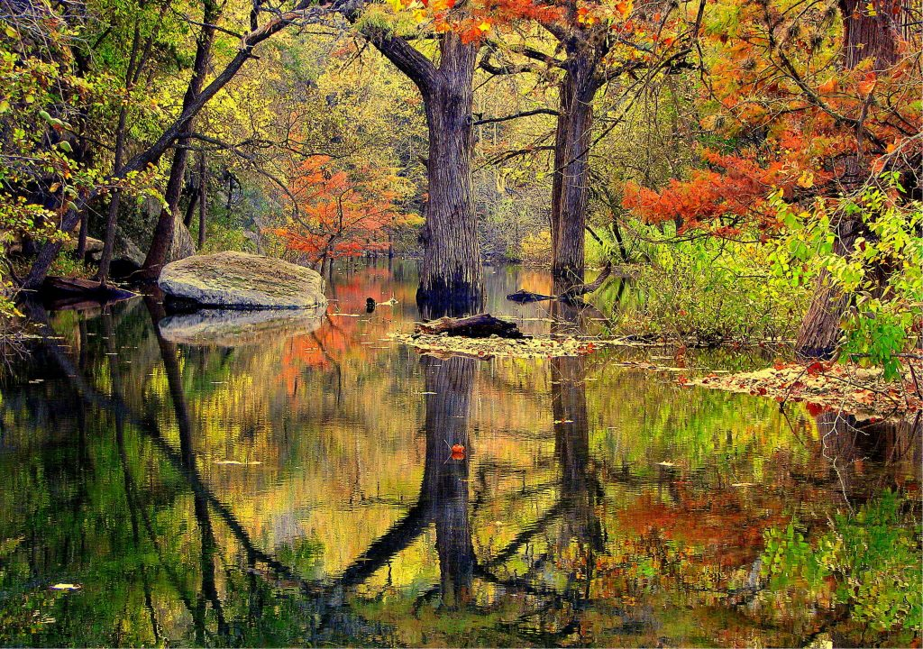 Image of cypress trees in the fall on a creek