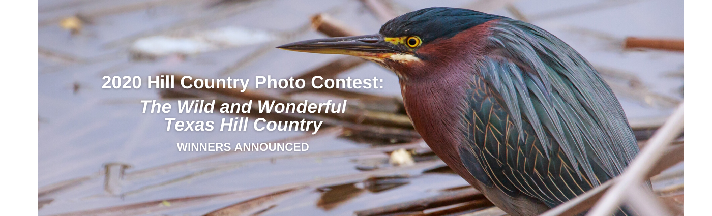 Green Heron Stands At The Edge Of Water - Grand Prize 2020 Photo Contest
