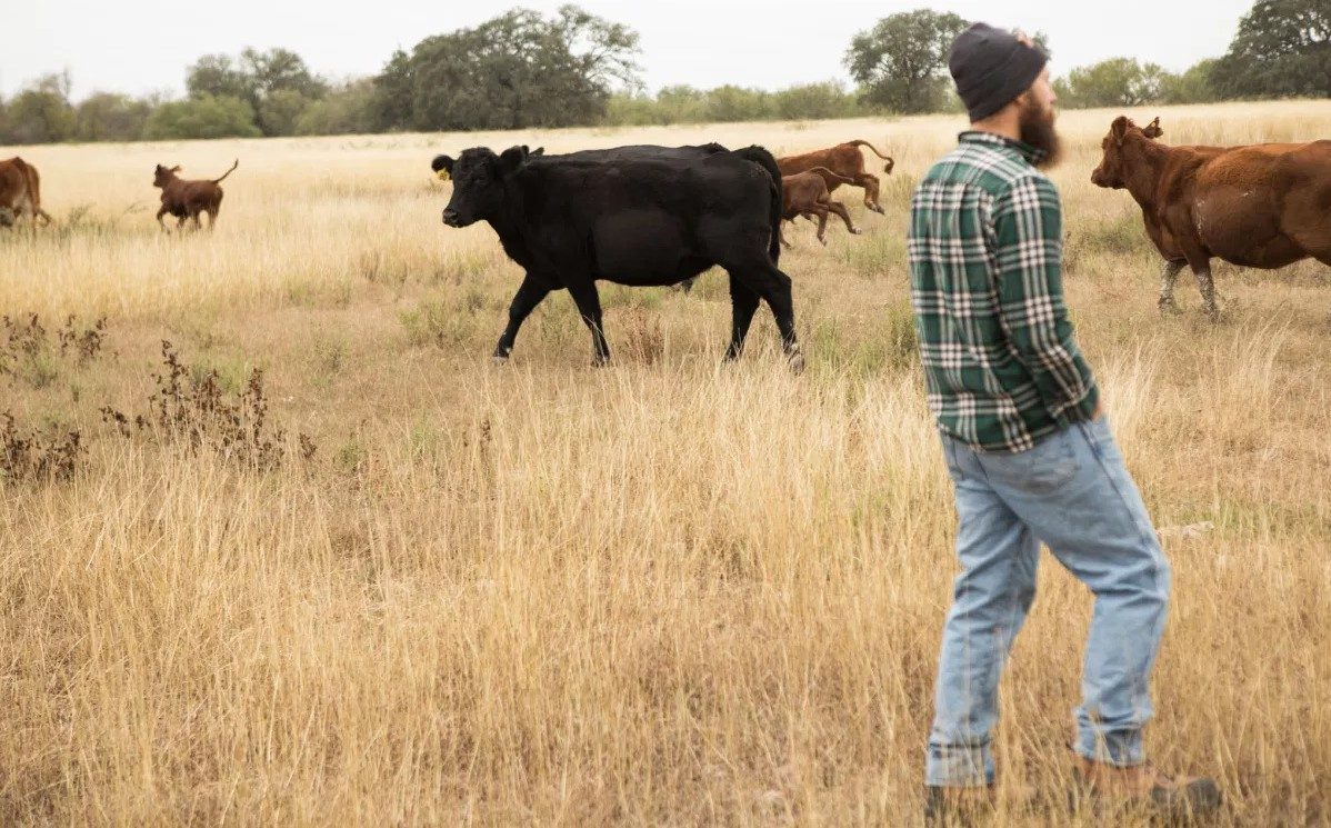 New SA company aims to encourage cattle ranching with eco-friendly tactics