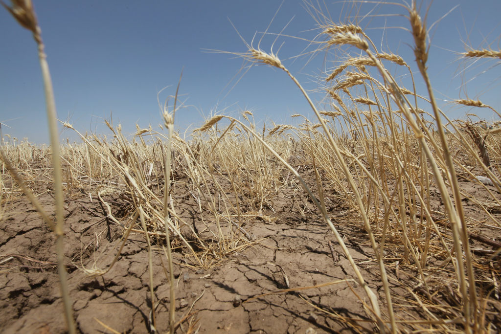 Texas A&M Expert: Drought Has Returned To Texas