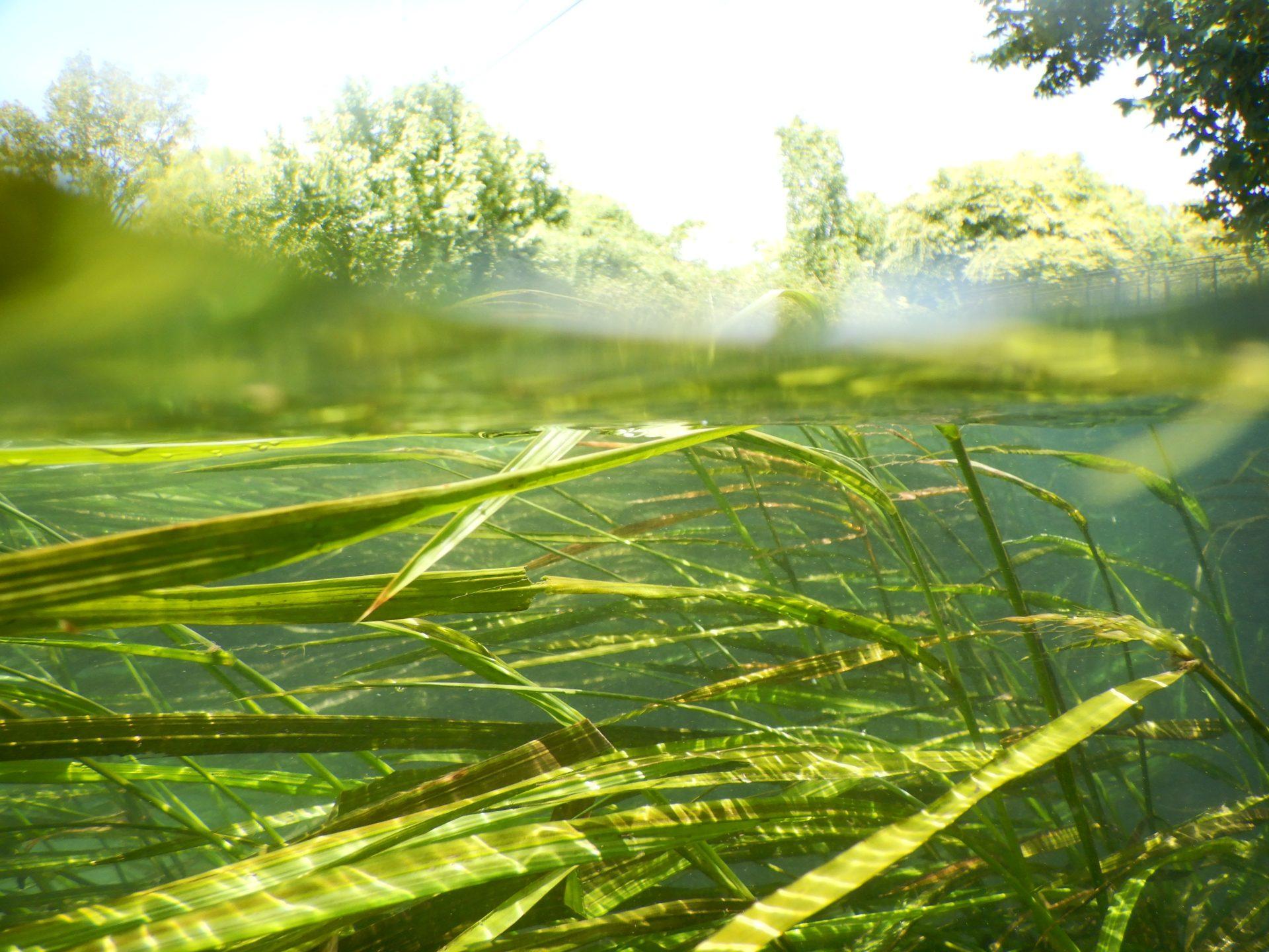 Wild Rice Sues To Stop Oil Pipeline