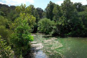 algae-covered lake in Austin