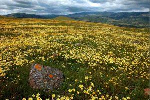 Photo of a California grassland