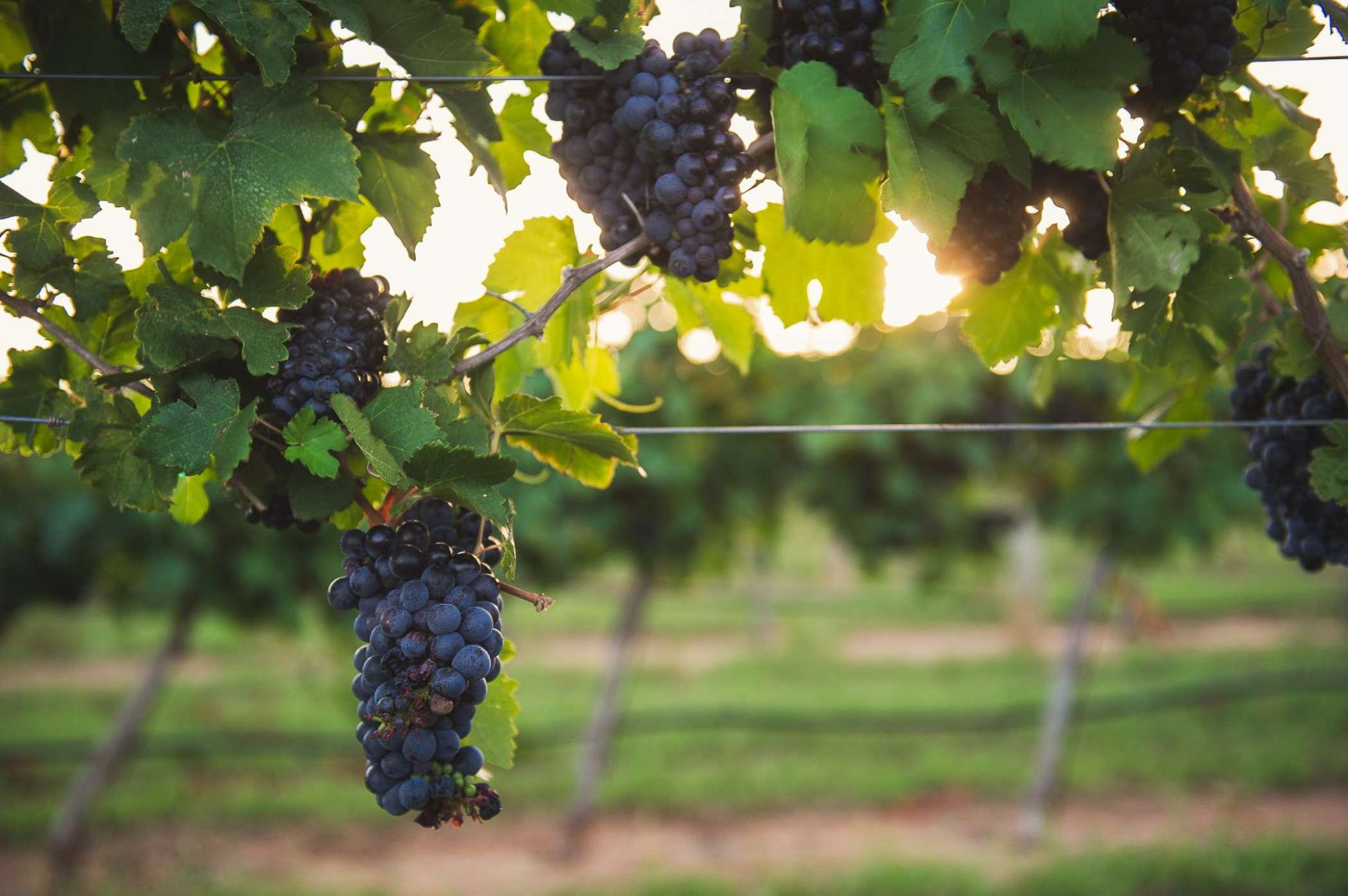Look Out Napa Valley, Texas Hill Country Named Among Best Wine Regions In U.S.
