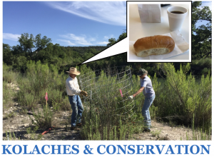 A man and a woman build fencing around a small tree in a riparian area. A thought bubble over the man's head shows a cup of coffee and a kolache. Text reads: Kolaches & Conservation.