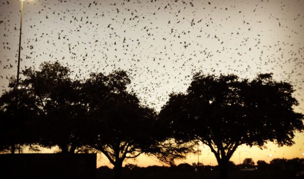 County To Turn Off Lights In Summer And Fall To Protect Songbirds