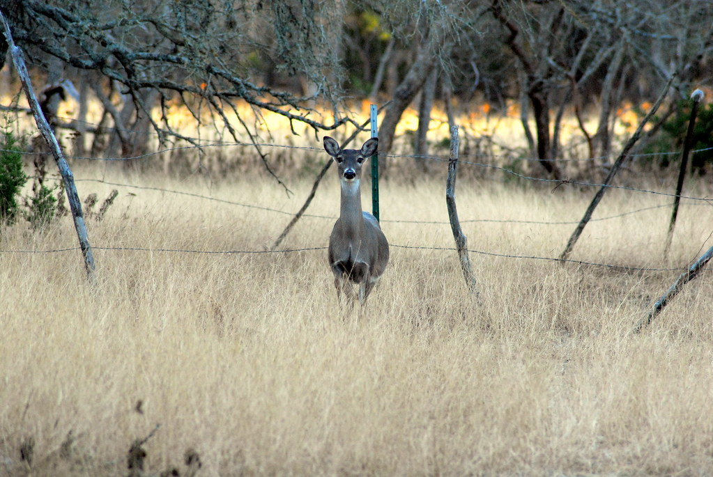 Chronic Wasting Disease And Deer Management On Private Land