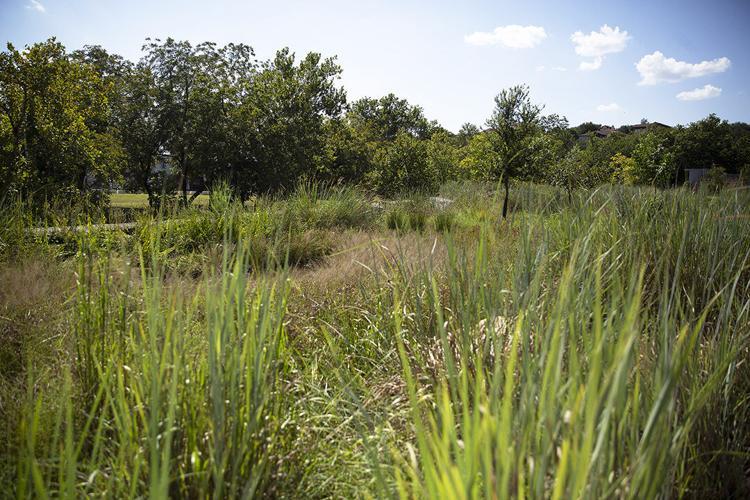A Green, Grassy Field