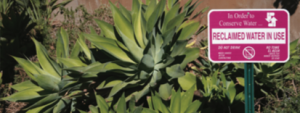 """Agave grows in front of a sign that reads """"reclaimed water in use"""""""