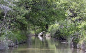 A photo of Flat Creek with riparian plants along both sides